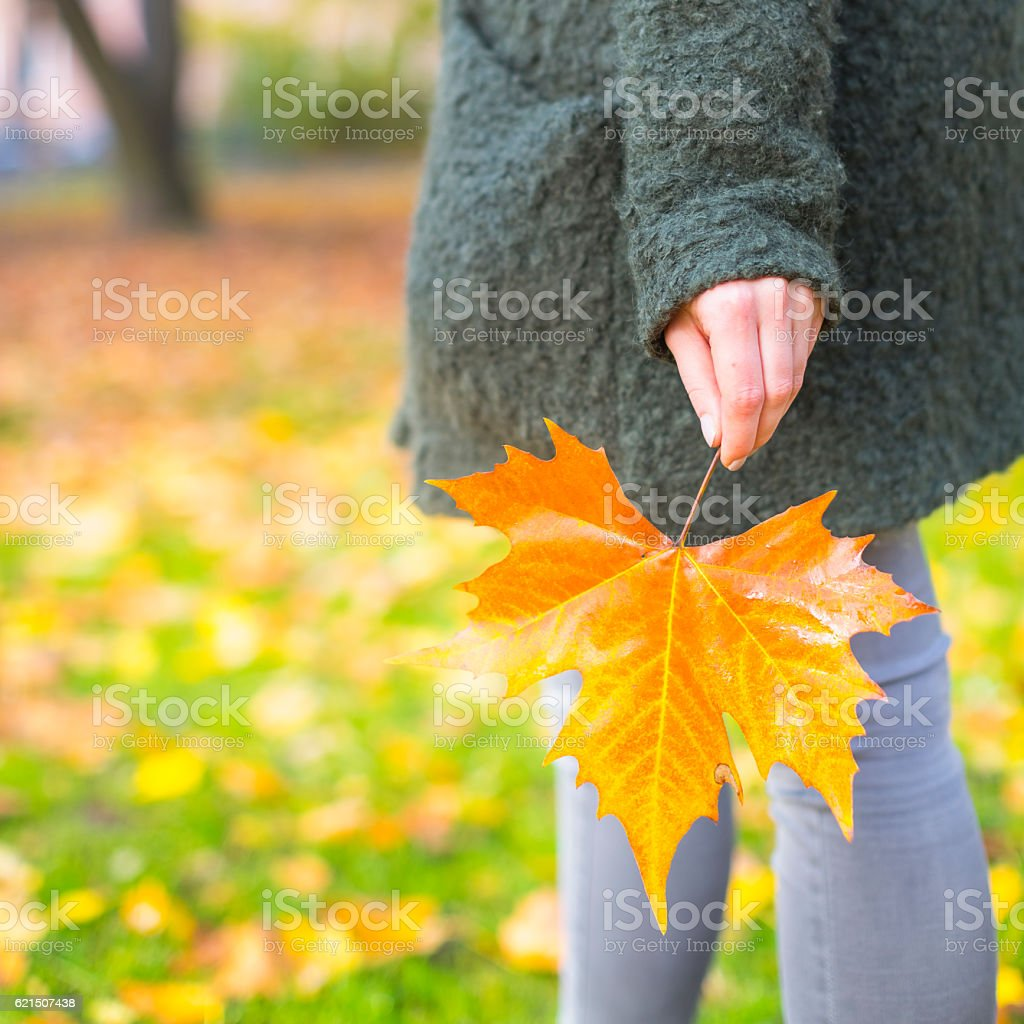 Maple Leaf in hand foto stock royalty-free