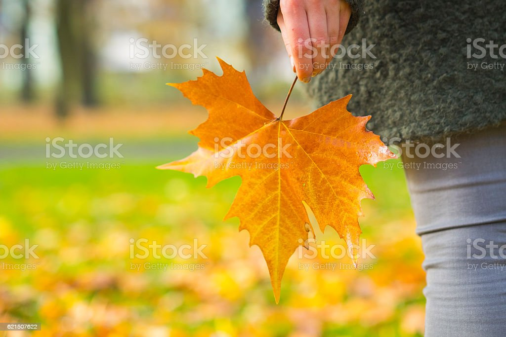 Maple Leaf in hand Lizenzfreies stock-foto