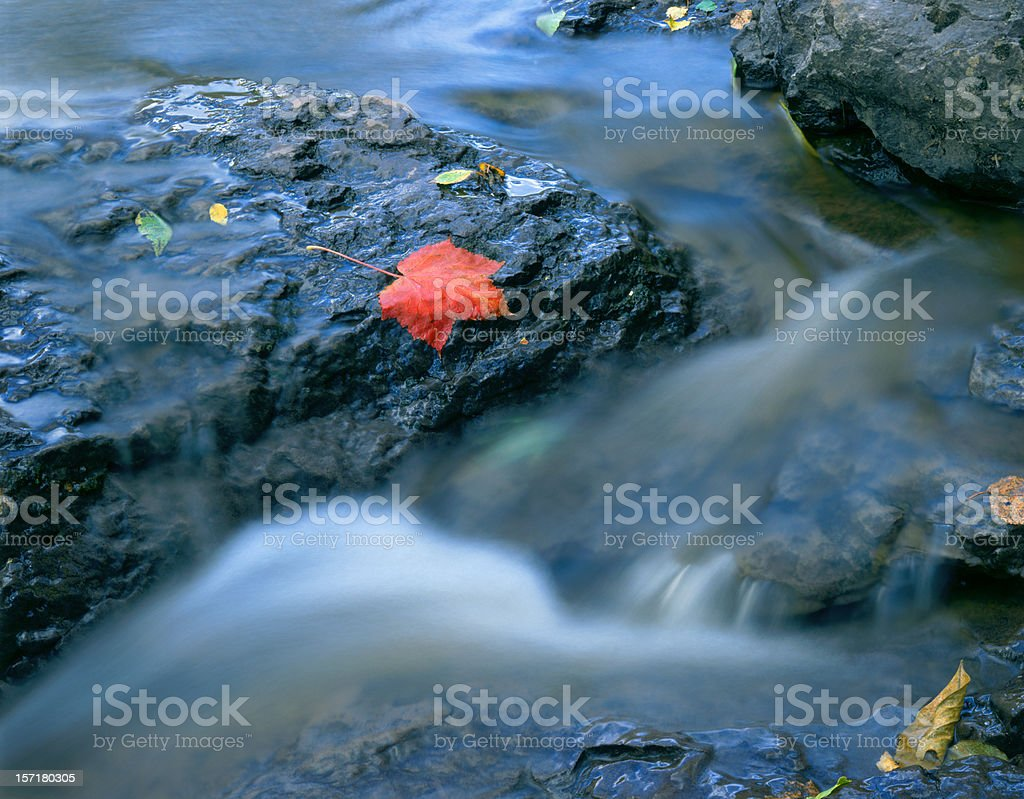 Maple Leaf in stream stock photo