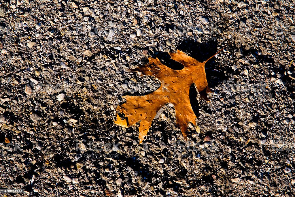 Maple leaf is laying on the granulated ground stock photo