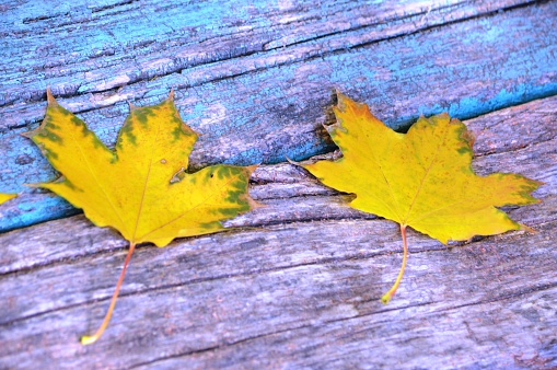 Autumn background with colorful leaves lying on the wooden bench in park.