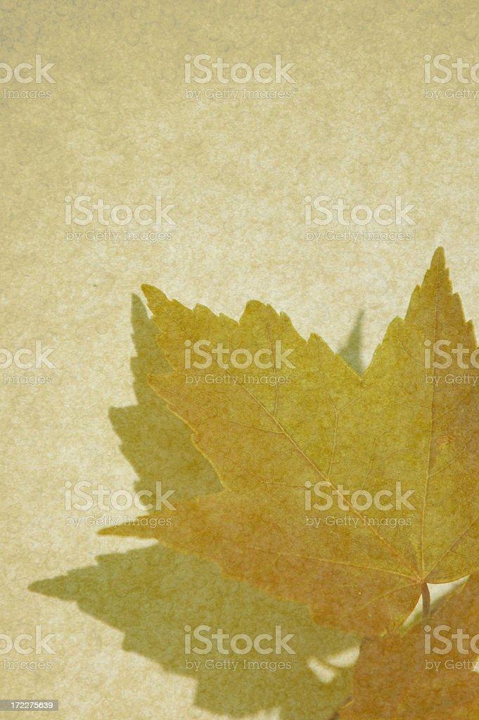 Maple Leaf Stationery royalty-free stock photo