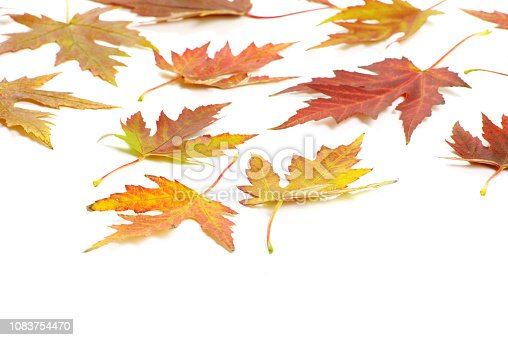istock maple leafs 1083754470