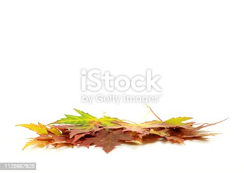 istock maple leafs 1125667825