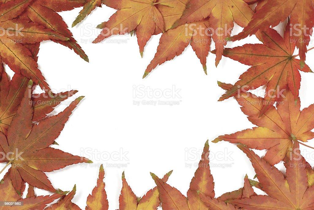 단풍 잎 프페임 royalty-free 스톡 사진