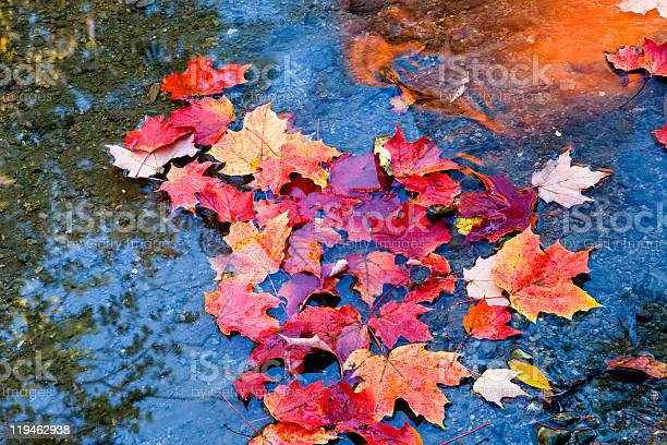 Photo of maple leaves in autumn