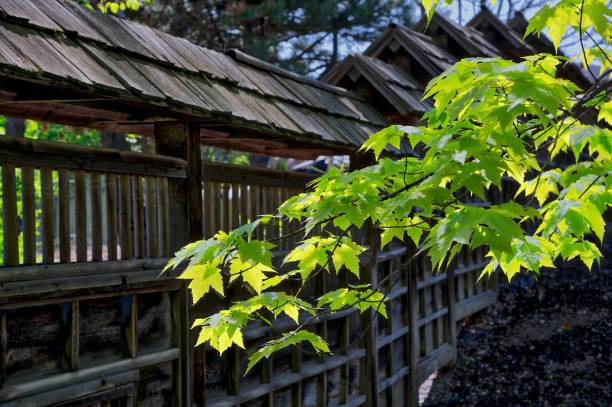 maple leaves in Janpanes garden in Toronto stock photo