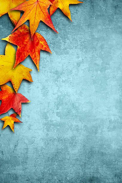 maple leaves left border - meerdere lagen effect stockfoto's en -beelden