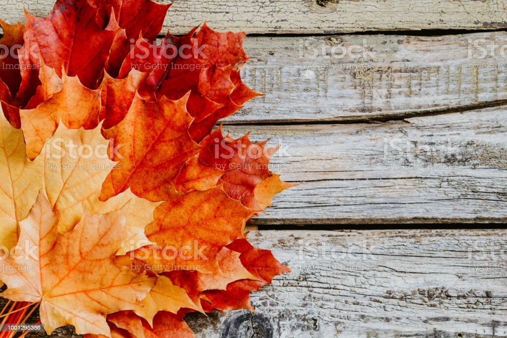 November Fall Backgrounds