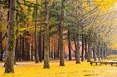 단풍 낙엽이 떨어져 양탄자 같은 모습.