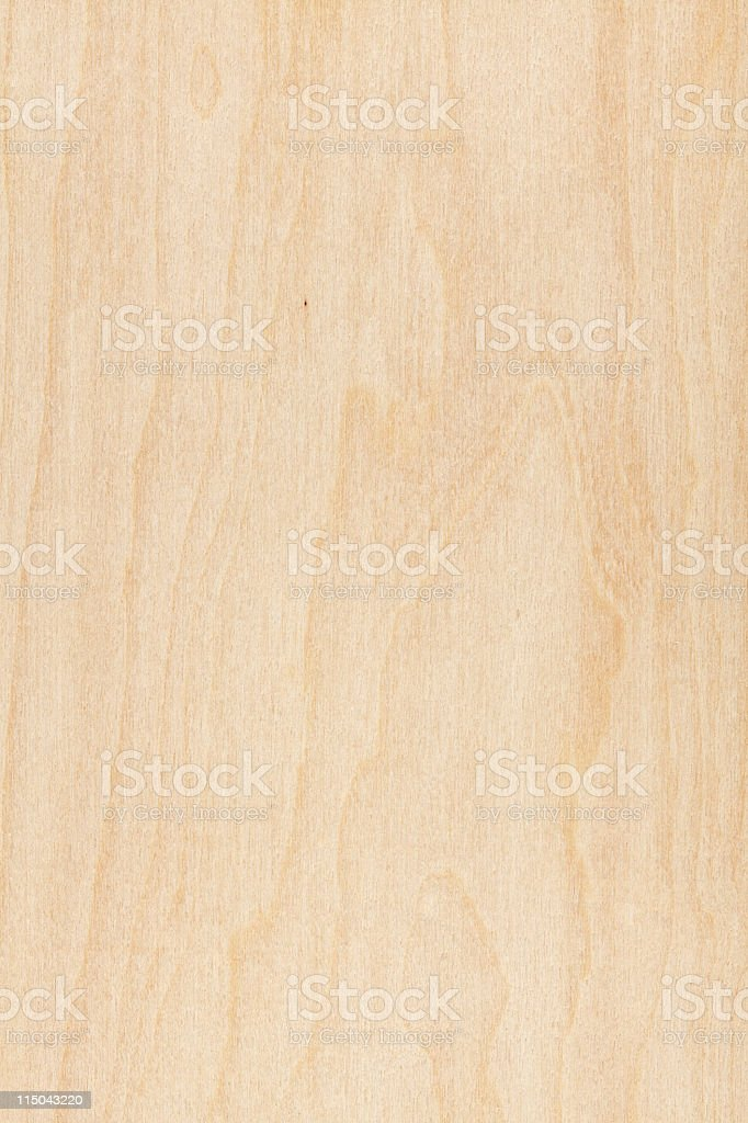 Maple stock photo