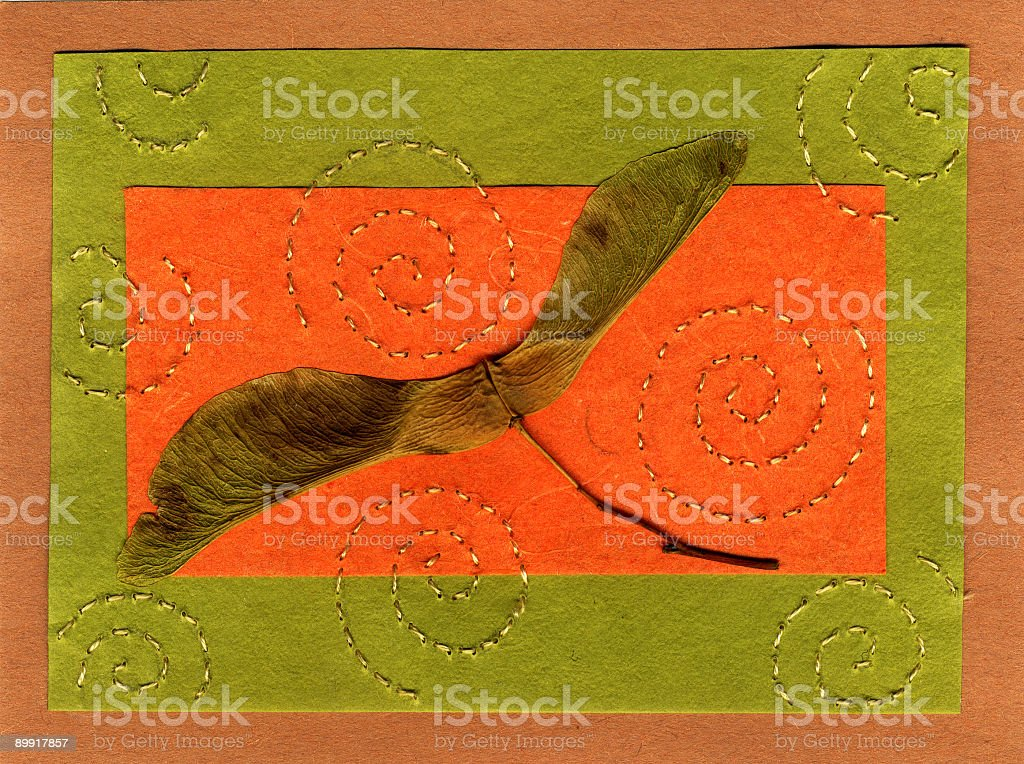 maple spinner royalty-free stock photo