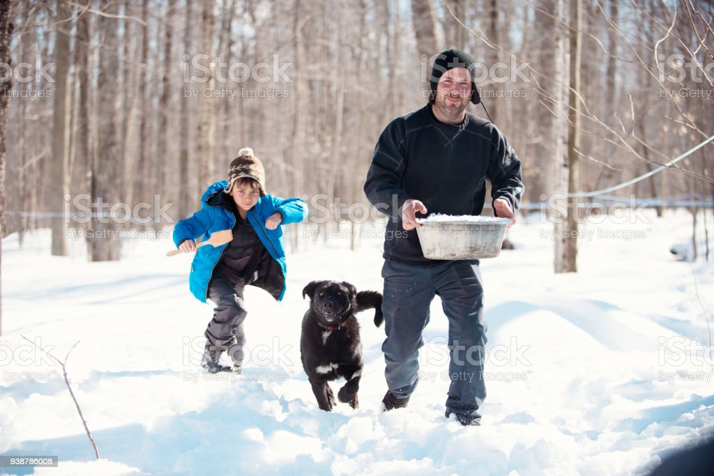 Maple Syrup industry time with father and son bringing snow for tasting maple syrup stock photo