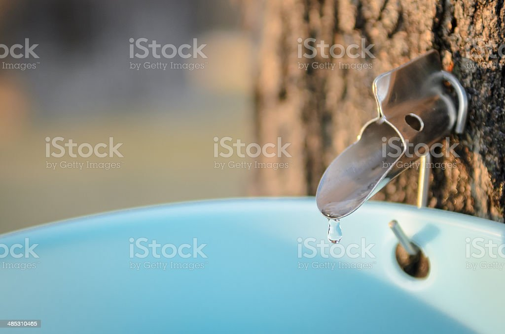 Maple Syrup Tap stock photo
