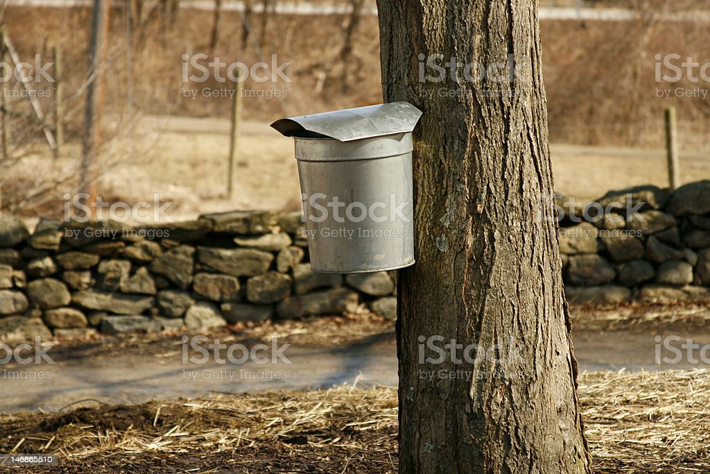 Maple Syruping royalty-free stock photo