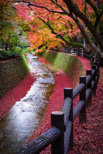 Ahornbaum entlang des Kanals in Kitano Tenmangu Garten, Kyoto, Japan – Foto