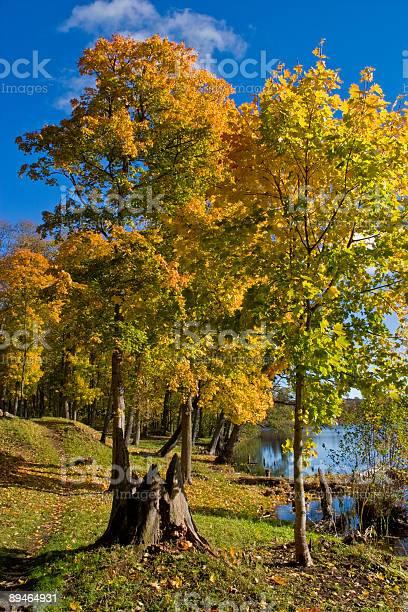 Photo of Maple tree