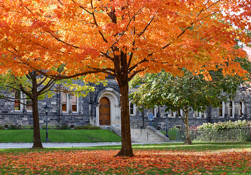 Maple tree with glorious fall colors in front of gothic style stone college building
