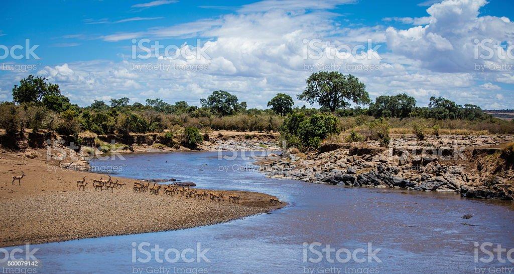 Mara River, Kenya stock photo