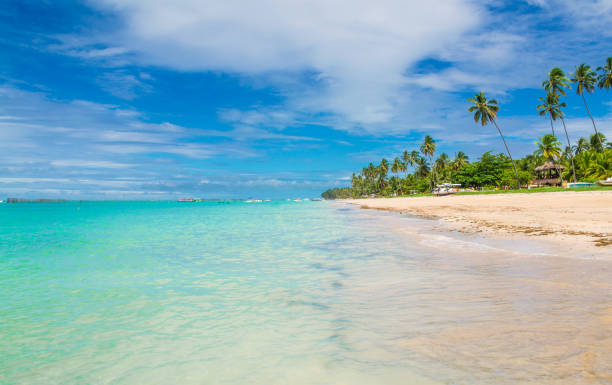 maragogi beach , brazil - бразилия стоковые фото и изображения