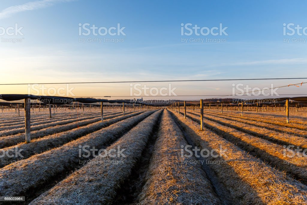 Marathon County Wisconsin ginseng farm stock photo