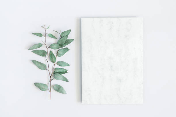 marble paper blank, eucalyptus branches on pastel gray background. flat lay, top view, copy space - still life stock pictures, royalty-free photos & images