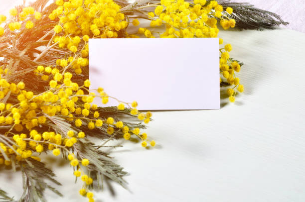 8 march spring background - white card and mimosa flowers - immagini mimosa 8 marzo foto e immagini stock