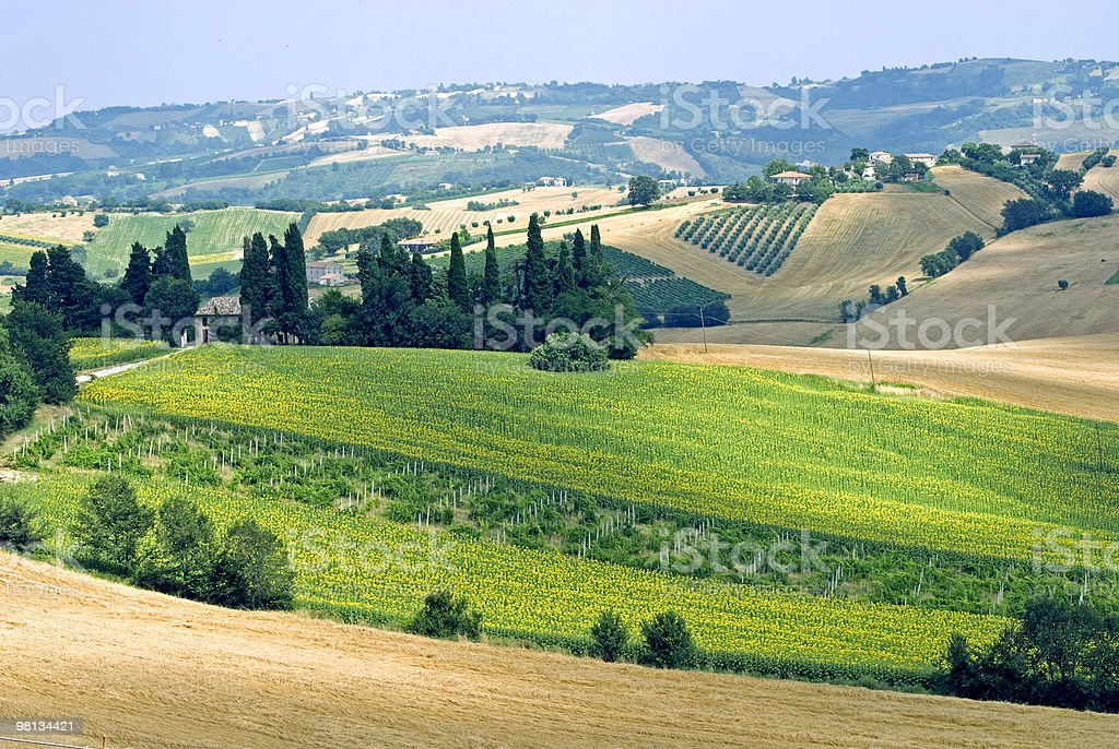 Marches (Italy) - Rural landscape at summer royalty-free stock photo
