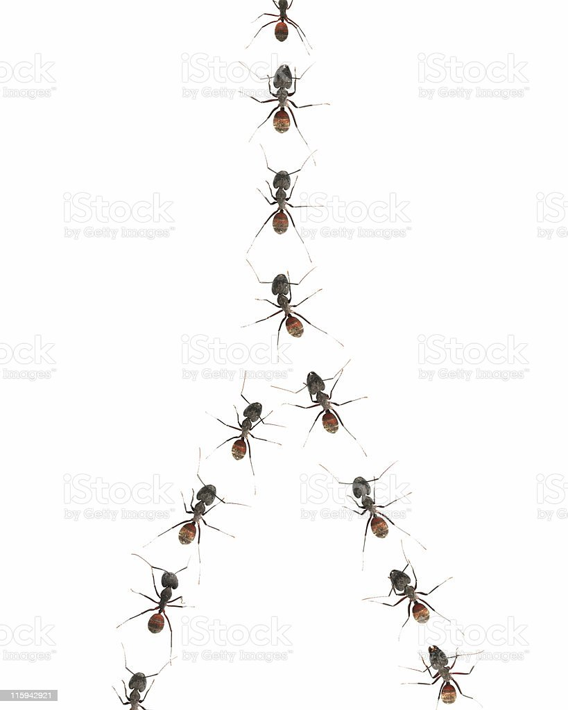 Marching ants 04 royalty-free stock photo