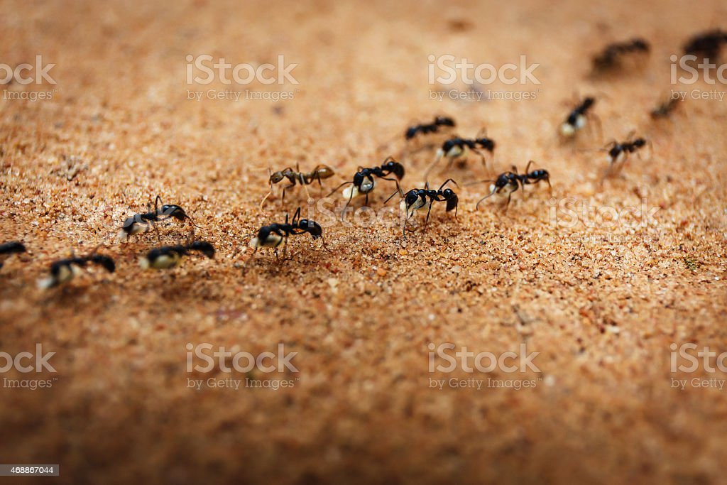Marching ants​​​ foto