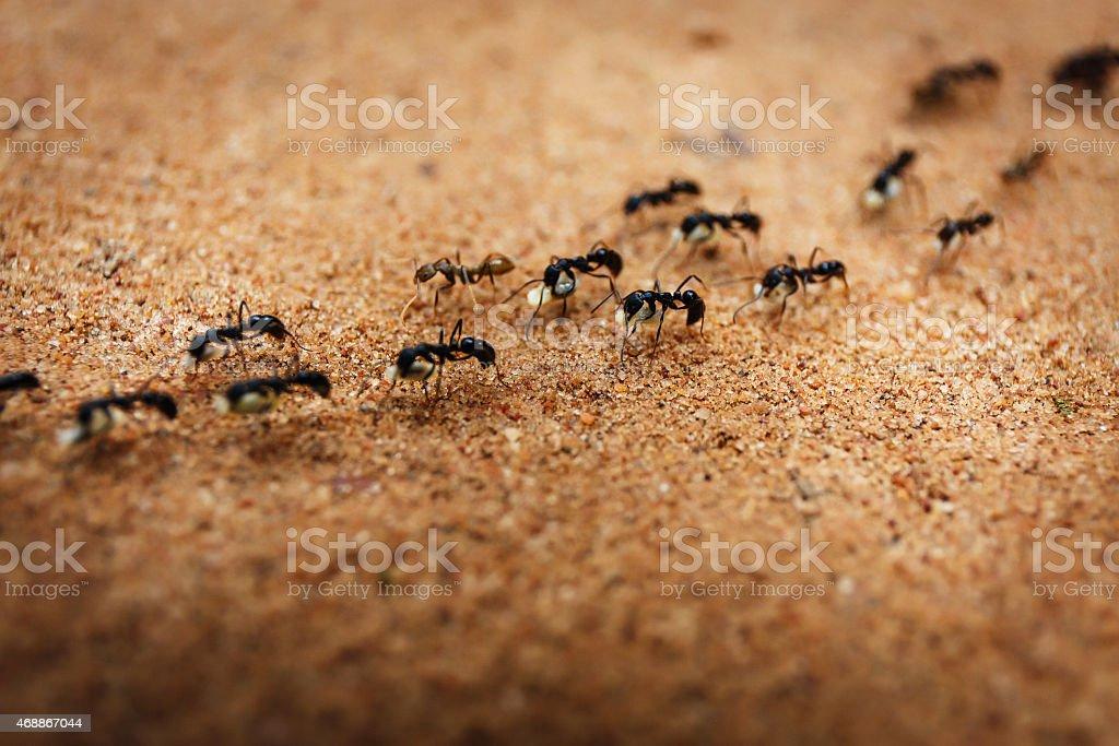 Marschieren Ameisen – Foto