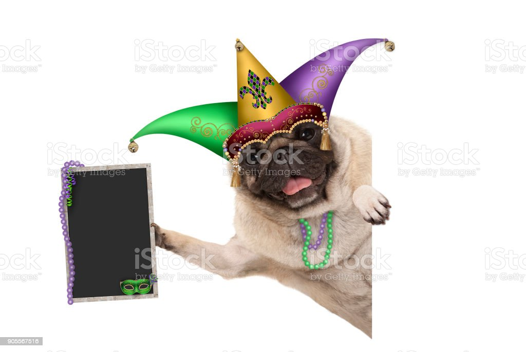 Mardi gras carnival pug dog with harlequin jester hat, venetian mask and decorated blackboard sign stock photo