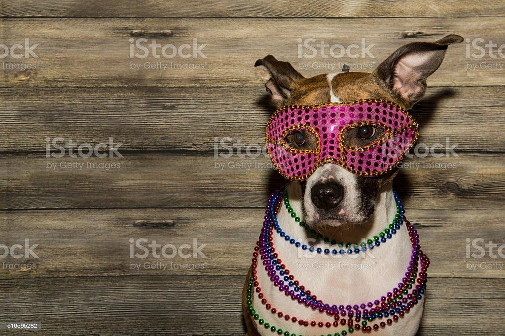 Mardi Gras Dog stock photo