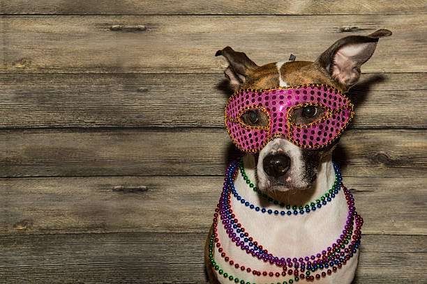 mardi gras hund - halloween party lebensmittel stock-fotos und bilder