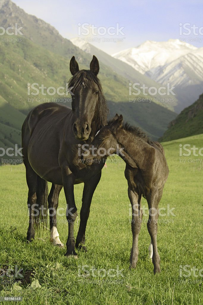 mare and colt in mountian pasture royalty-free stock photo