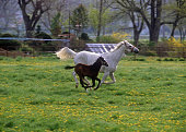 istock Mare and colt running 471328969
