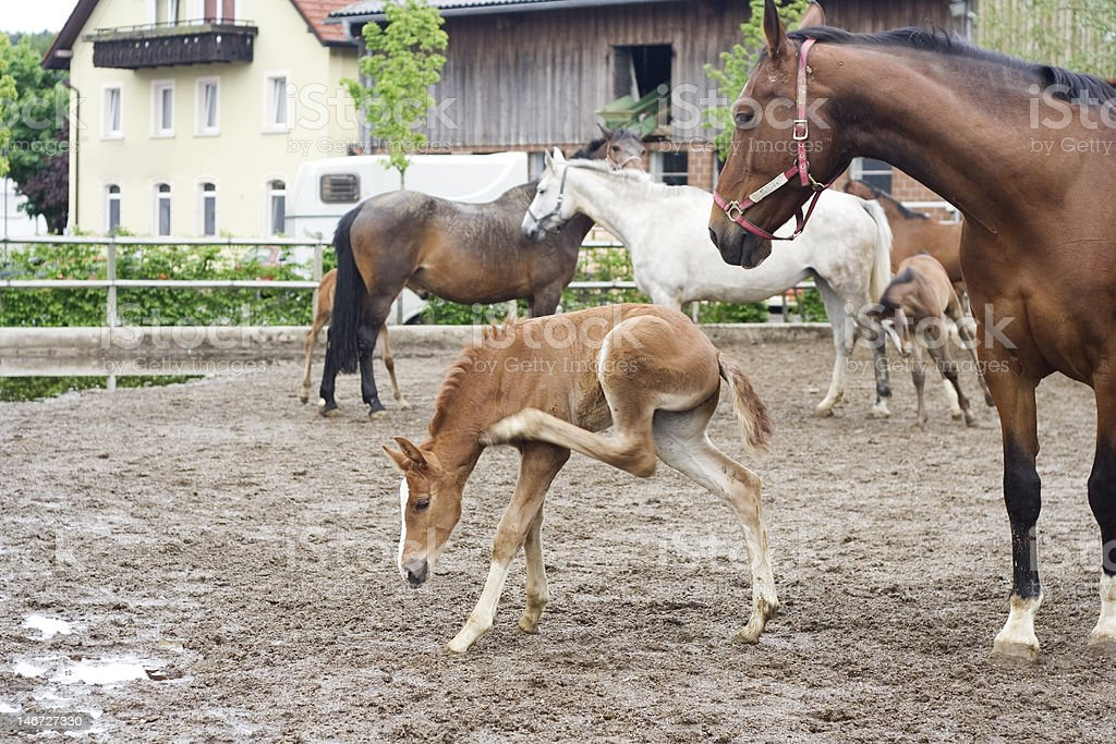mare and foal royalty-free stock photo