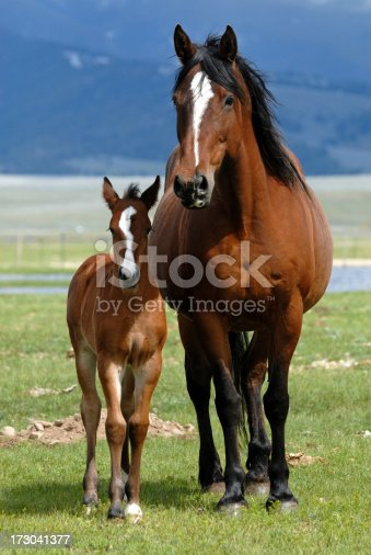 Beautiful bay mare and young foal.