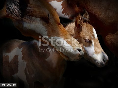 a portrait of a mare and foal