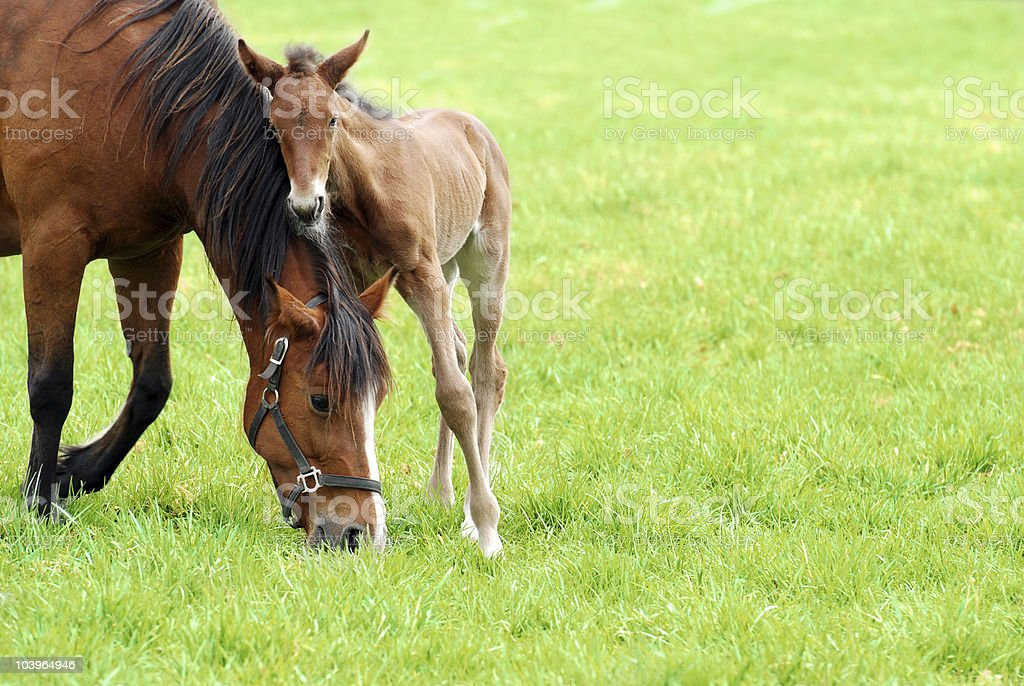 mare and her foal stock photo