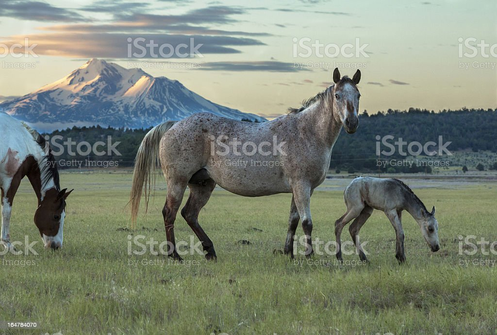 Mare and New Foal royalty-free stock photo