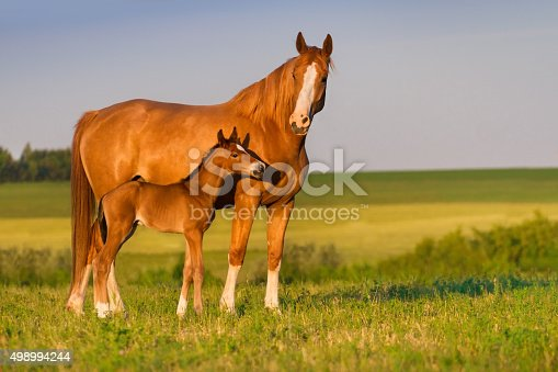 istock Mare with foal 498994244