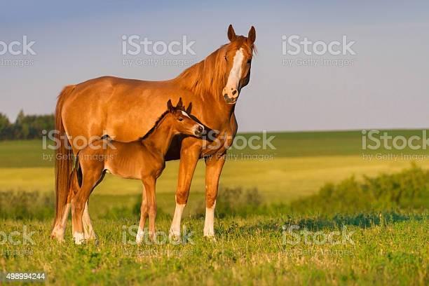Mare with foal picture id498994244?b=1&k=6&m=498994244&s=612x612&h=yd3hqepzkpxoctxdazlexwqnhfp44zsqy23gafnitoc=