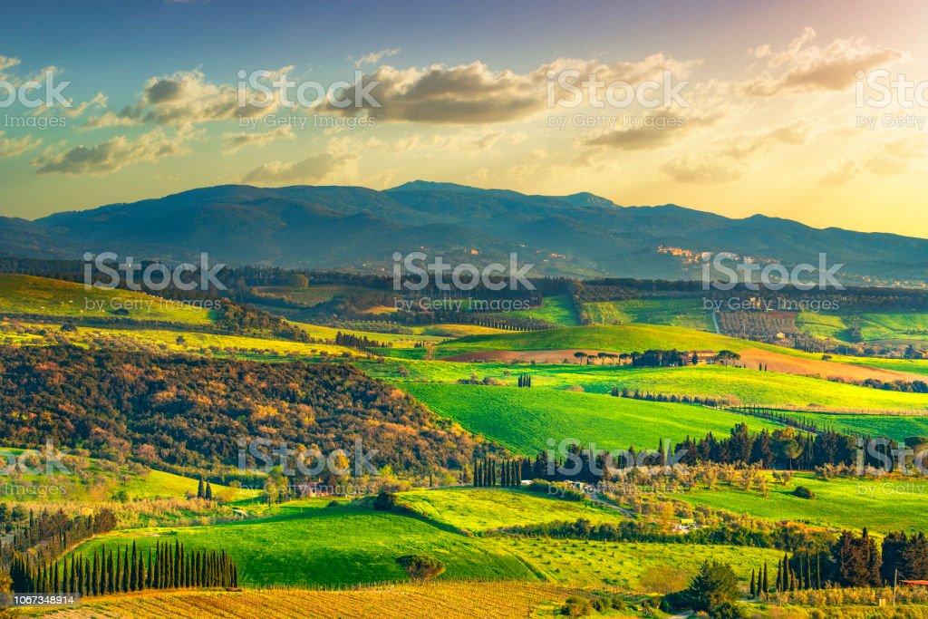 Maremma countryside and Magona forest. Bibbona, Tuscany, Italy. - foto stock
