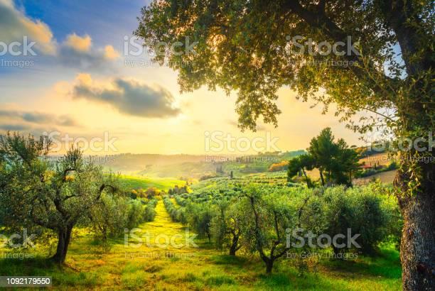 Maremma countryside panorama and olive trees on sunset casale pisa picture id1092179550?b=1&k=6&m=1092179550&s=612x612&h=l64nr3ertf skbldndmfq3 nrx lfgtgl9hijzoajei=
