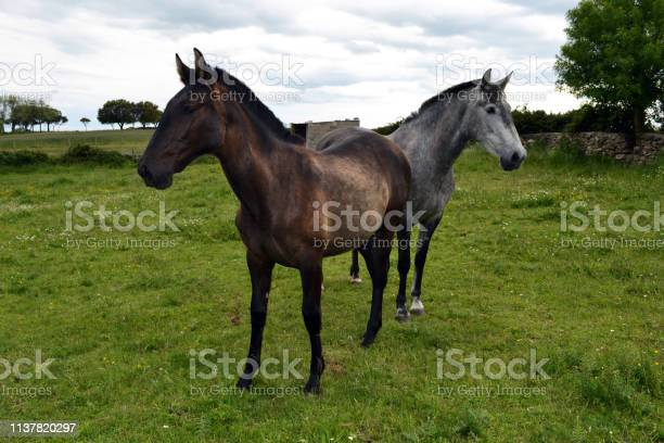 Mares thrush and black mother and daughter angry picture id1137820297?b=1&k=6&m=1137820297&s=612x612&h=yzjdpnms1tow0nkwiqm rb6h7xg2k 3iw4vscqveqh4=