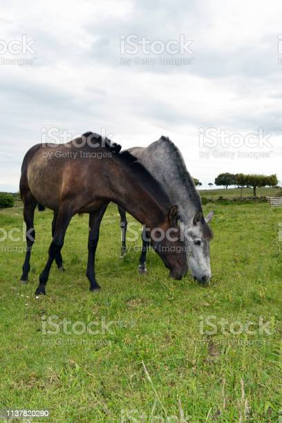 Mares thrush and black mother and daughter showing affection picture id1137820290?b=1&k=6&m=1137820290&s=612x612&h=5o8d33jcvqsr6h7wjw4dxj ayzbgcotl ssvaewi2uk=