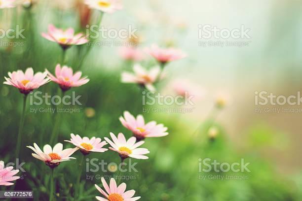 Margaret flowers picture id626772576?b=1&k=6&m=626772576&s=612x612&h=mlf8gg6bpnnxxmbcmzkza1yuj5eidrdhkrwtswulhri=