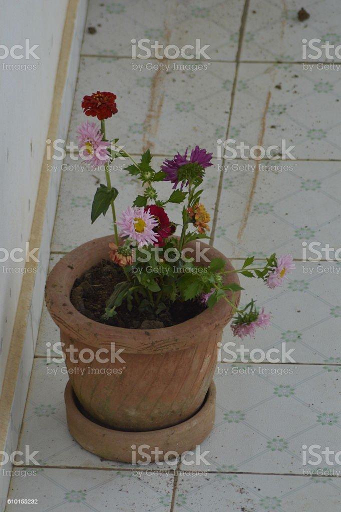 Marguerites multicolores stock photo
