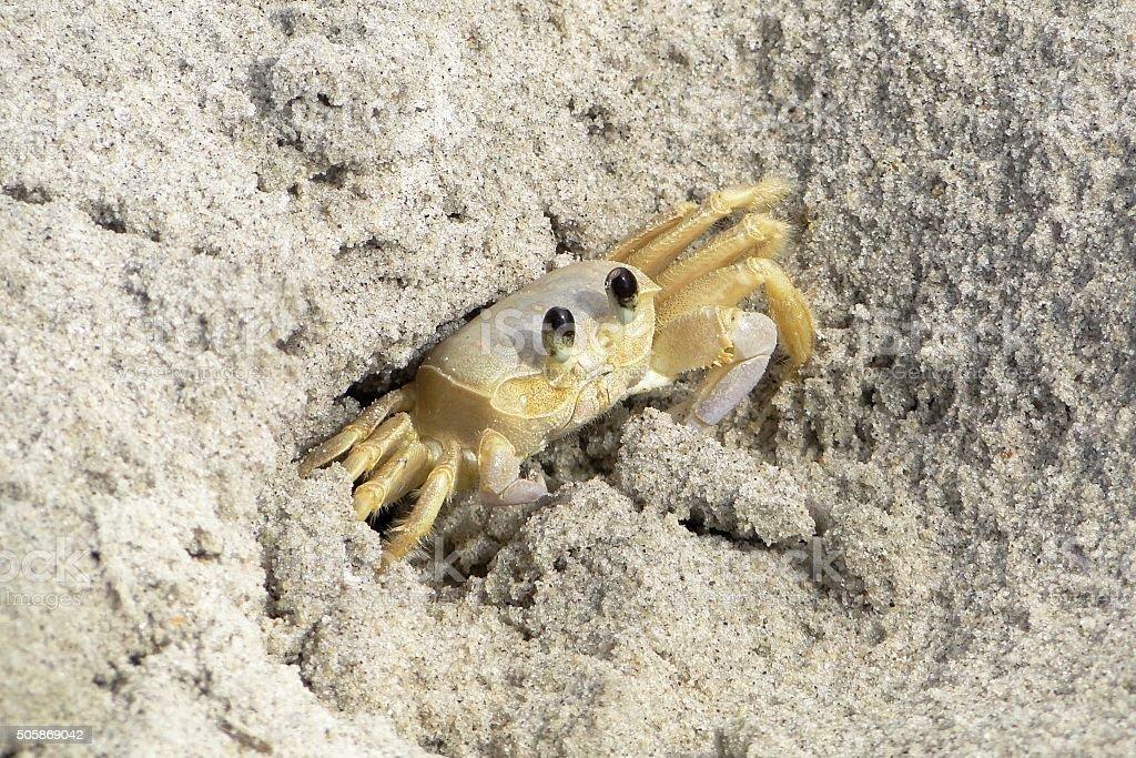 Maria Farinha crabe sur la plage - Photo